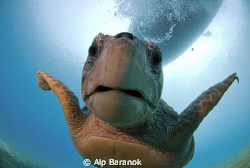 Caretta caretta from Ka/Turkiye. Taken with Nikon 10,5mm... by Alp Baranok 